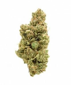 The Wife Terrapin Care Station, where to buy The Wife Terrapin Care Station online, buy the wife cannabis strain, best The Wife Terrapin Care Station online